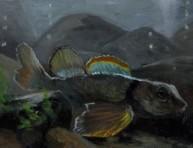 imagen Algas peligrosas devastan cardúmenes