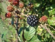 imagen Cultivo de frutas