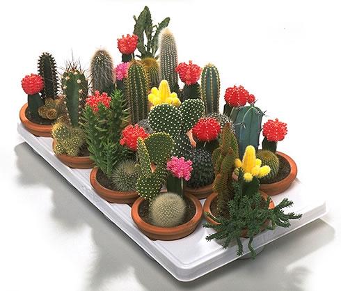 Cactus guia de jardineria jardines y plantas - Guia de jardineria ...