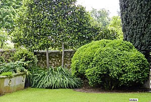 Tu jard n perenne for Arbustos perennes para jardin