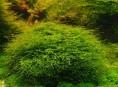 imagen Plantas para tu acuario