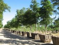 imagen Consejos para comprar un árbol