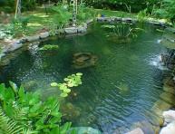 imagen Evita las algas en tu estanque