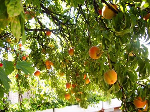 Planifica tus frutales - Cuando plantar frutales ...