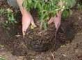 imagen Plantación de arbustos