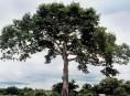 imagen Riega tu árbol