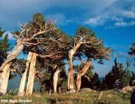 imagen Conoce tu árbol