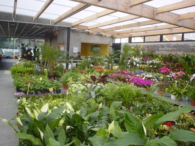 elige bien tus plantas de interior On vivero plantas interior