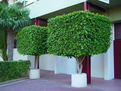 Tipos de poda para un rbol for Arboles decorativos para jardin