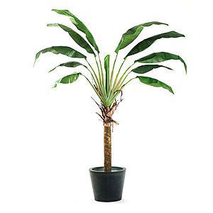 Palmeras en interior for Plantas de interior tipo palmera