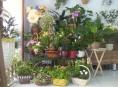 imagen Elige bien tus plantas de interior