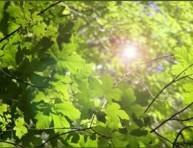 imagen Clima y cultivo de plantas: Luz