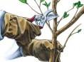 imagen Tipos de poda para un árbol