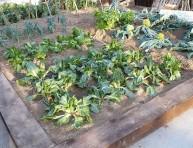 imagen Divide tu huerto en hojas