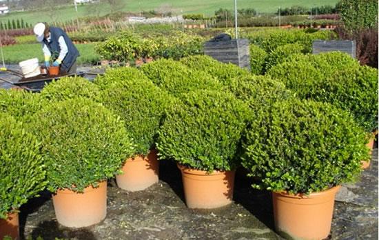 trasplantar arbustos On tipos de arbustos