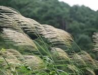 imagen Clima y cultivo de plantas: Viento