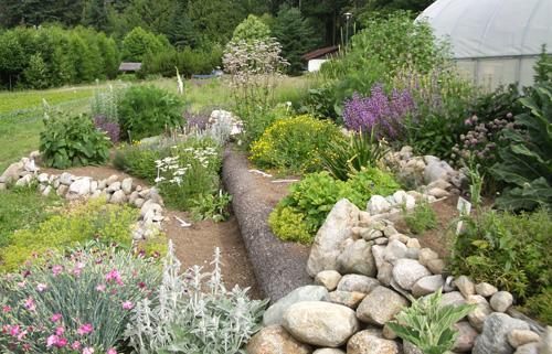 Jard n de hierbas arom ticas - Plantas para estanques de jardin ...