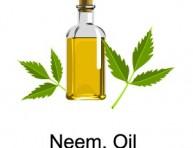 imagen Aceite de Neem, un pesticida natural