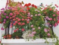 imagen Cuidado con la altura de las plantas
