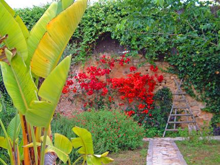 Plantas para un jard n ecol gico for Articulos de jardineria