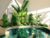 imagen Prolonga la floración de las plantas de interior