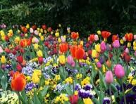 imagen Ahorrar al máximo con tus flores