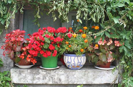 Consejos para un jardín en macetas