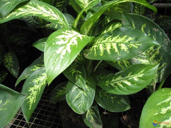 Hojas de plantas con su nombre imagui for Plantas interior fotos y nombres