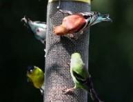imagen Atraer pájaros al jardín