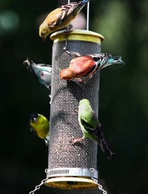 Atraer p jaros al jard n for Bebederos para aves jardin