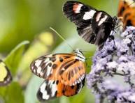 imagen Algunas ideas para atraer a las mariposas a tu jardín