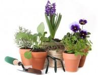 imagen Consejos básicos para cultivar en maceta