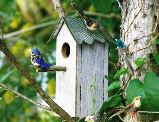 Construir una casita para pájaros silvestres Artículo Publicado el