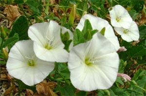 diagnostico por hierbas silvestres 2