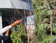 imagen En qué situaciones debemos podar un arbusto