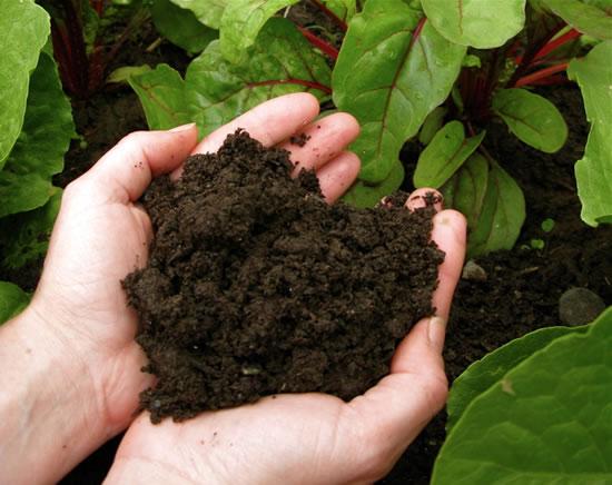 caracteristicas basicas de un buen suelo 1