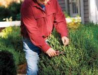 imagen Cuándo podar los arbustos