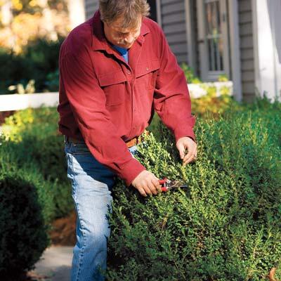 Época para podar los arbustos