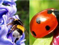 imagen Los insectos aliados del jardinero
