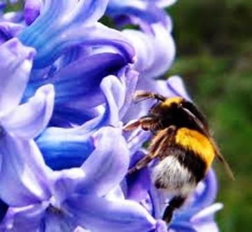 Los insectos aliados del jardinero for Se necesita jardinero