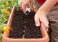 imagen Reproducción sexual y tipos de siembra