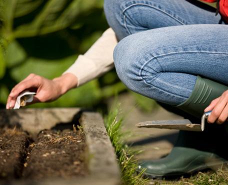 Cómo evitar el damping-off en la siembra