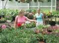 imagen Cómo nos venden las plantas en el vivero