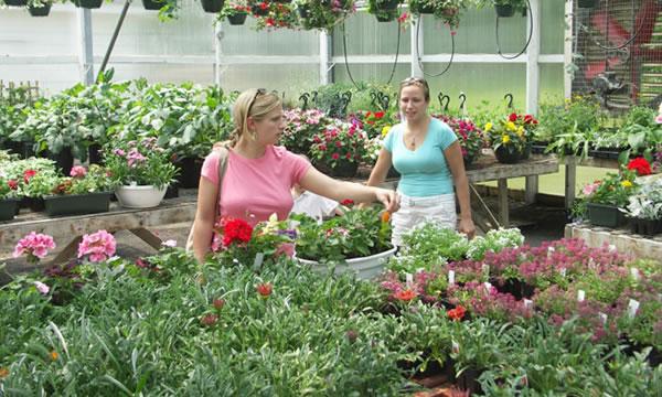 Como se venden las plantas en el vivero