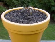 imagen Cómo plantar una semilla de mango