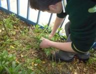 imagen Cómo podemos combatir las malezas en el jardín