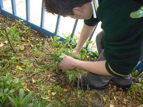 C mo podemos combatir las malezas en el jard n for Como evitar que salga hierba en el jardin