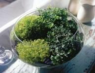imagen Jardinería decorativa: componer un terrario