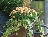 imagen Composición de vivaces en jardinera