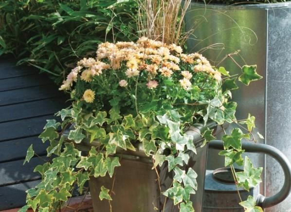 Composición de vivaces en jardinera 1